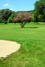 Golf Course, Sand Pit, Pink Flowering Tree