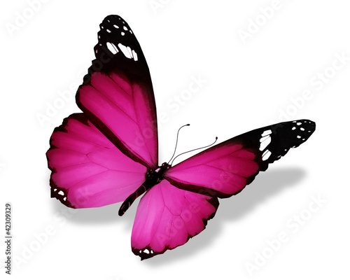 fioletowy-motyl-na-bialym-tle