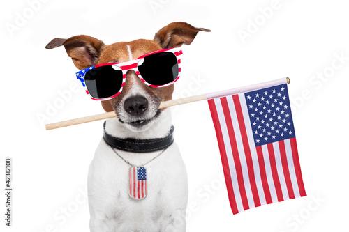 Fototapety, obrazy: american dog