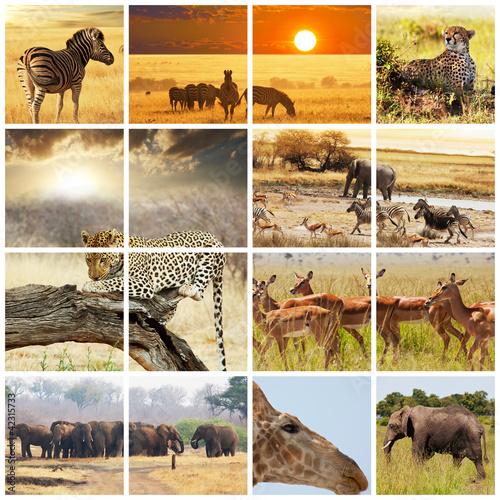 zwierzeta-afryki