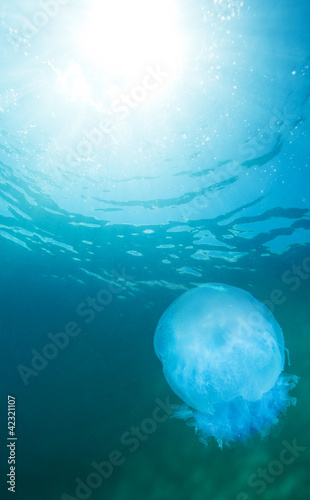 Fototapety, obrazy: jellyfish and water surface