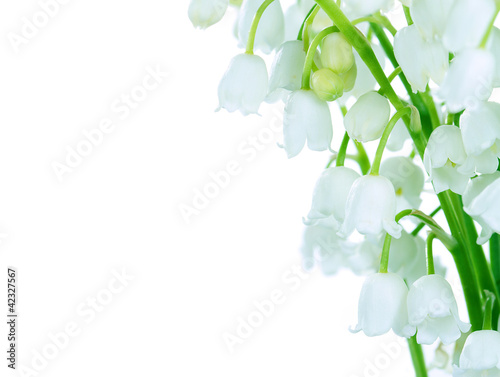 Photo Stands Lily of the valley Lilies of the valley on white