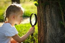 Little Girl Examining Tree Ste...