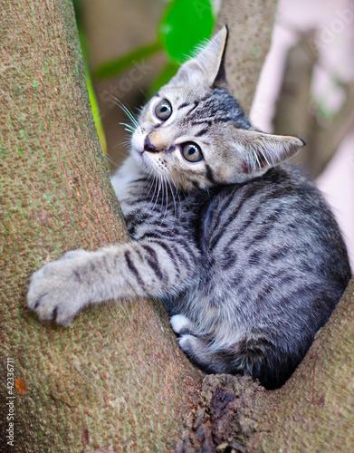 Montage in der Fensternische Katze Little Thai cat .