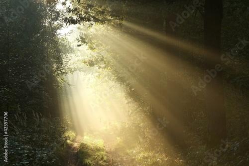 Papiers peints Foret brouillard Sunlight falls on a dirt road on a foggy autumn morning