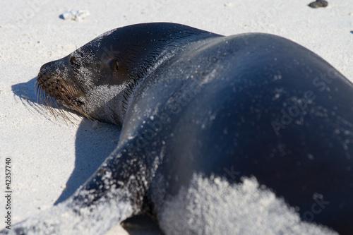 Photo  Galapagos Sea Lion