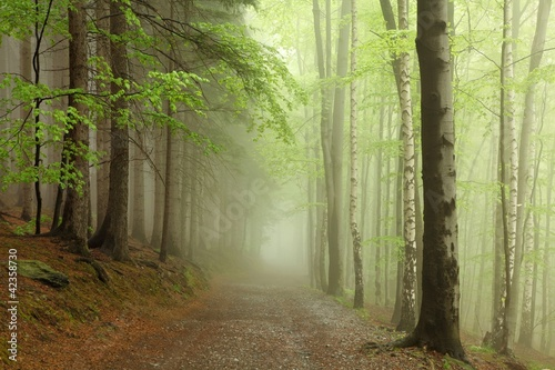 Staande foto Bos in mist path on the border between coniferous and deciduous trees