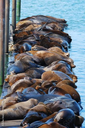 Deurstickers Nasa Sea Lions