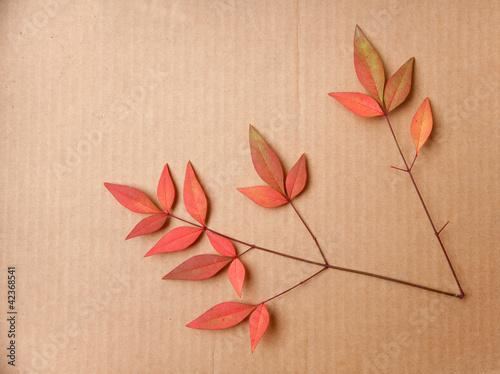 Fotografie, Obraz  Pinnate Leaf