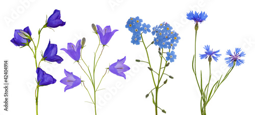 blue flowers collection isolated on white Canvas Print