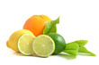 canvas print picture - Arrangement mit Zitrusfrüchten, citrus fruits