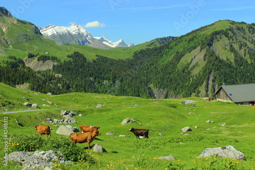 Alpage d'Aravis - Buy this stock photo and explore similar