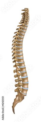Plakat  Spine