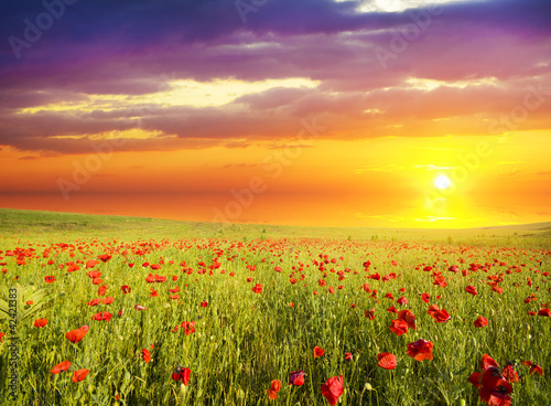 Poster Geel poppies against the sunset sky