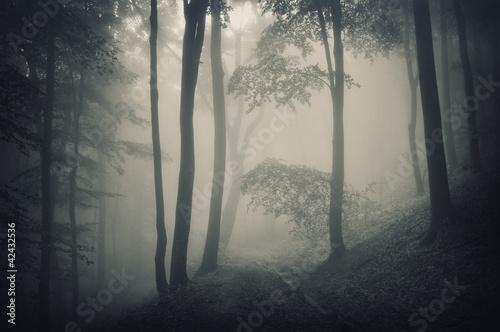 sylwetka-drzew-w-lesie-z-mgla