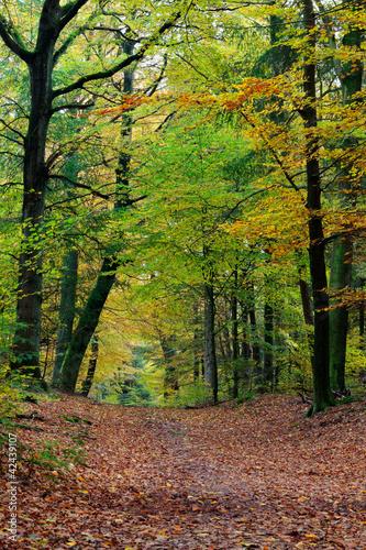 scena-jesien-las-z-zywymi-kolorami