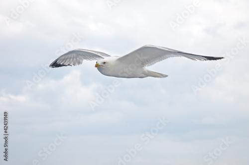 Fotografie, Obraz  Albatross