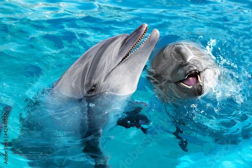Staande foto Dolfijn ペアバンドウイルカ