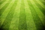 Rasen im Stadion