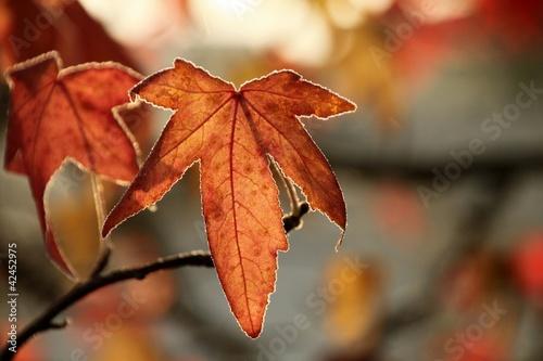 Kolekcje specjalne naklejek jesienny-lisc