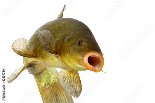 Valokuva  colored fish swimming free, carp, tench