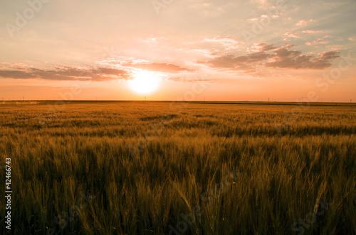 Foto auf Gartenposter Landschappen Colorful sunset over wheat field.