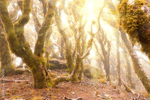 dziewicze-gorskie-lasy-deszczowe-z-marlborough-nz