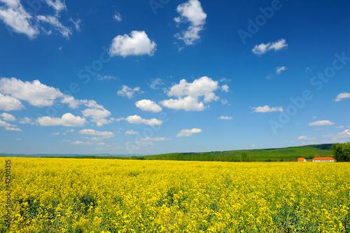 Foto op Aluminium Oranje Wide meadow of yellow flowers of rapeseed
