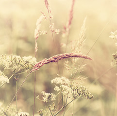 Fototapeta Summer Meadow