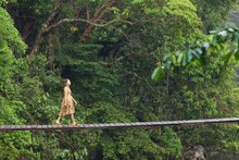 Woman Walking On Jungle Bridge
