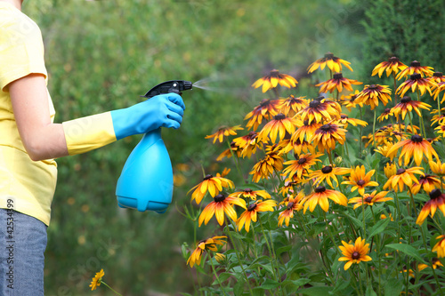 Obraz Gardening - spraying plants - fototapety do salonu