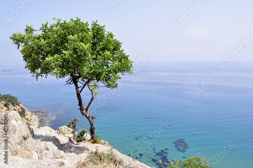 Spoed Foto op Canvas Cyprus Cipro. Cyprus. Il mare e la costa nei Baths of Aphrodite