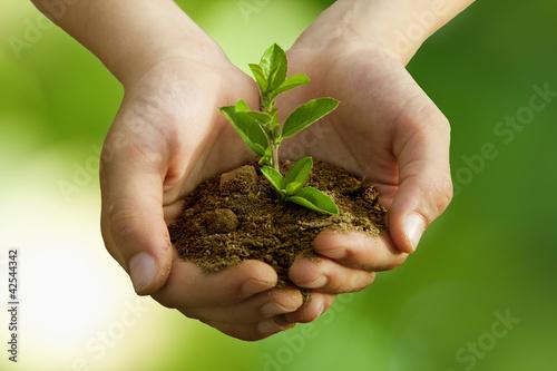 Foto-Kissen - árbol en las manos