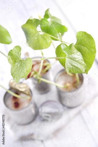 Fototapeta Organic Canned Beans obraz na płótnie