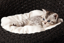 Cat Sleeping In The Basket
