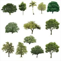 Trees, Grass