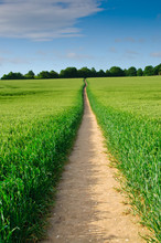 Narrow Path Through Field