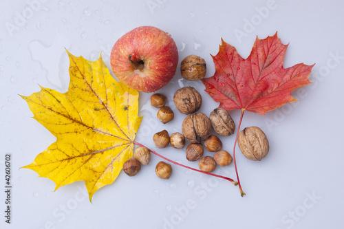 Kolekcje specjalne naklejek kolorowe-liscie-klonu-z-owocami