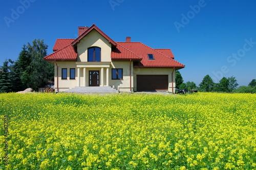 Fototapeta Dom w kwitnącym rzepaku obraz