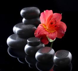 Obraz na płótnie Canvas Spa stones and red flower on black background