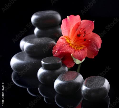 Poster de jardin Nénuphars Spa stones and red flower on black background