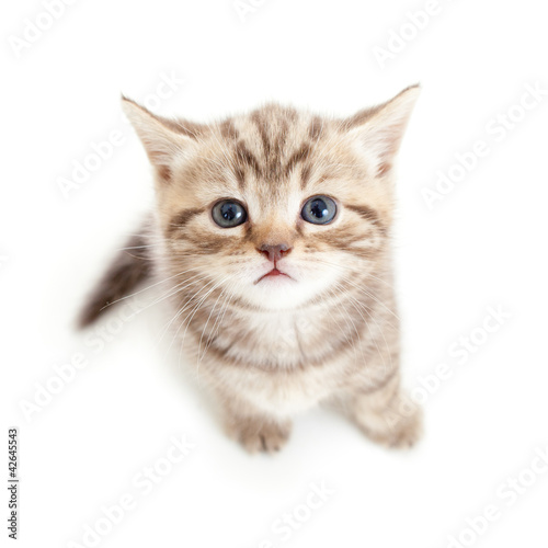 toy cat that meows and moves