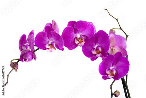 Papiers peints Orchidée орхидеи