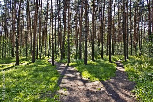 Fototapeten Wald Footpath in the wood