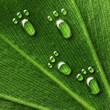Leinwandbild Motiv Water footprints on leaf