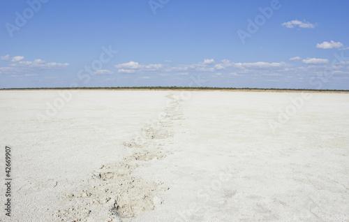 Fotografie, Obraz  Animal footprints trail in a dry salt desert bed