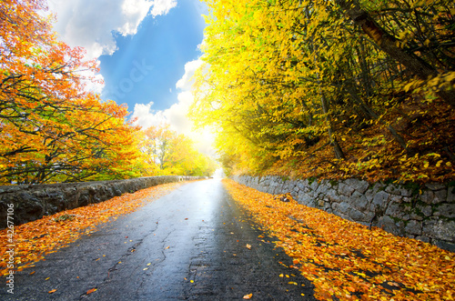 Kolekcje specjalne naklejek jesienia-drogi-lesnej