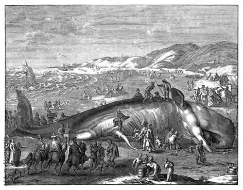 Whale Beached - 16th century Wallpaper Mural