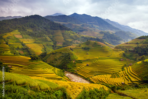 Tuinposter Honing Rice Terraces