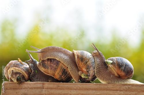 Fotografie, Obraz  snails